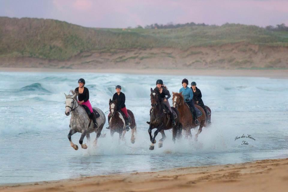 Sattelfeste Reiter die am Strand gallopieren